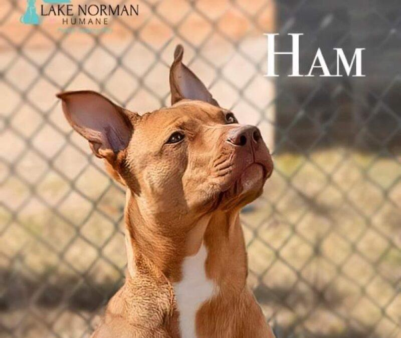 Adopt A Pet – Ham