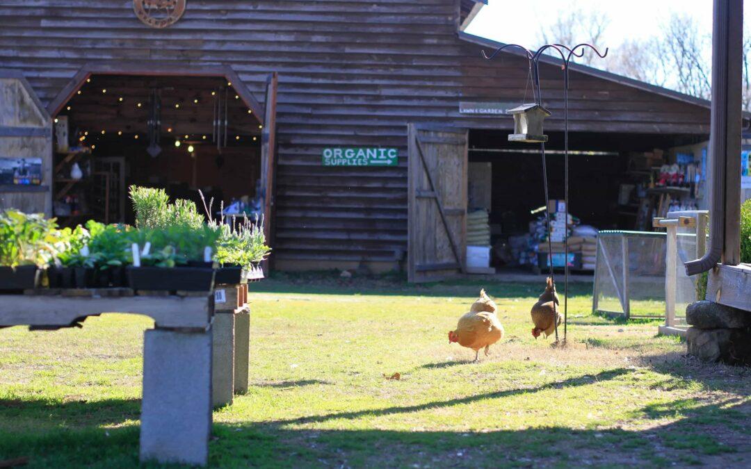 McLeod Organics at The Bradford Store – Huntersville